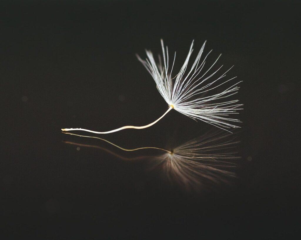 Detalle de flor estilo minimalista